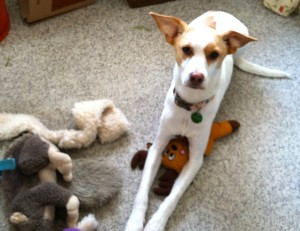 My rescue dog Jonah with a few of his toys...