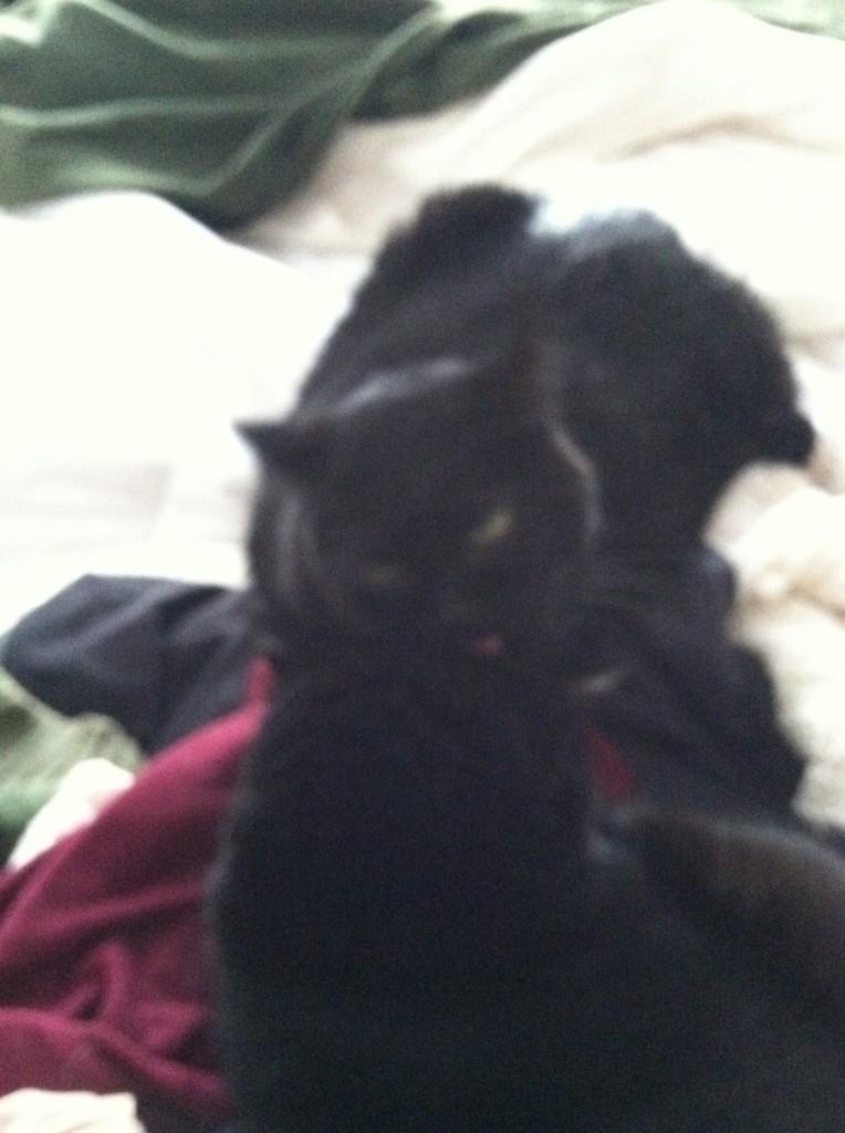 Mabel licking Juniper's head.